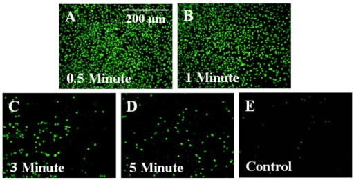 Treatment with oxygen plasma was shown to improve cellular adhesion on Parylene-C coated ME material. Fluorescent images for 0.5 and 1 min plasma-treated samples (A & B) revealed greater levels of fibroblast adhesion than samples that were plasma-treated for 3 and 5 min (C & D). (E) Untreated Parylene-C controls showed little or no evidence of cell adhesion.