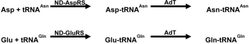 Reaction catalyzed by non-discriminating AspRS/GluRS and amidotransferases (modified from Tambula-Hansen et al., [161]).