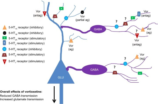 Serotonergic influence on GABAergic neurotransmission in limbic system brain regions. Serotonergic heteroreceptors expressed on GABAergic interneurons and glutamatergic principal cells can modulate the excitatory state of neural networks associated with the control of cognitive function and mood. Vortioxetine may be an example of a drug that inhibits GABA neurotransmission via serotonergic mechanisms. Question marks denote receptors where expression on GABAergic interneurons has been indirectly suggested but no immunohistochemical verification exists for limbic brain regions.Abbreviations: ag, agonist; antag, antagonist; GABA, γ-aminobutyric acid; GLU, glutamate; 5-HT, 5-hydroxytryptamine; Vor, vortioxetine.