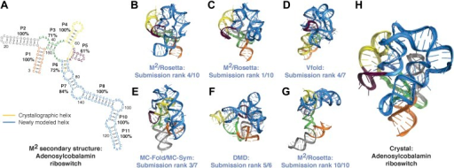 Blind models generated for RNA-puzzles can attain 1-nm resolution or better but cannot predict the most accurate models.(A) M2-derived secondary structure of S. thermophilus adenosylcobalamin riboswitch aptamer, generated for the RNA-puzzle 6 challenge (Miao et al., 2015). Bootstrap support values for each helix are shown as percentages. Crystallographic Watson–Crick base pairs missing in the secondary structure are connected by yellow lines, and non-crystallographic Watson–Crick base pairs predicted in the secondary structure are connected by blue lines. (B–G) Blind 3D models of the S. thermophilus adenosylcobalamin riboswitch aptamer generated for the RNA-puzzle 6 challenge. Models were generated using (B) M2/Rosetta, 12.1 Å all-heavy-atom RMSD to crystal; (C) M2/Rosetta, 17.1 Å RMSD; (D) Vfold, 22.1 Å RMSD; (E) MC-Fold and MC-Sym, 23.4 Å RMSD; (F) DMD, 24.0 Å RMSD; (G) M2/Rosetta, 32.8 Å RMSD. Modeling methods were previously described in detail (Miao et al., 2015). For each modeling method, the most accurate submitted model to the crystal structure is shown (B, D–F). The ranks predicted by the modelers of their own submissions ('submission rank') are given below each model. (H) Crystal structure of the S. thermophilus adenosylcobalamin riboswitch aptamer (PDB ID 4GXY).DOI:http://dx.doi.org/10.7554/eLife.07600.013