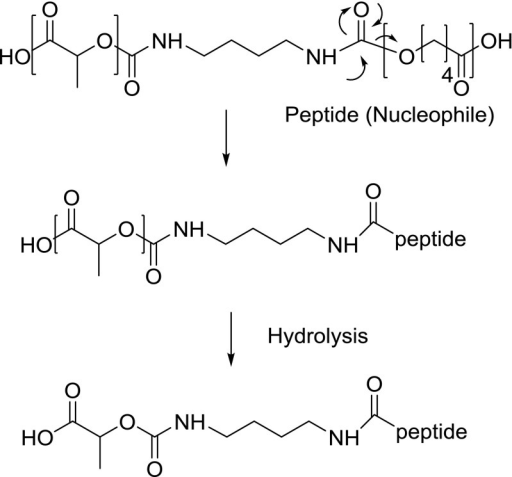 Proposed mechanism of reaction between peptide and carbamate group in (PC-PEG-PC)-(PL) multiblock copolymer.