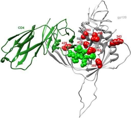 Mapping of signature sites on the three-dimensional structure of gp120 shows clustering around the CD4-binding site.A ribbon representation of the crystal structure from the JRFL gp120 molecule (grey) bound to CD4 molecule (green) (PDBID: 2B4C). The CD4 binding site is highlighted in transparent green while signature sites 283, 343, 362, 389, 429, 465 and 471 are all depicted as red space-filling residues.