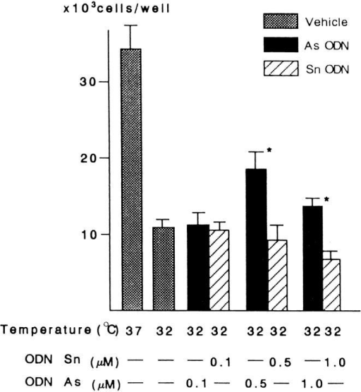 Effects of antisense (As) ODN on the cold-induced  suppression of cell growth. Cell numbers were determined after 2 d  of culture at the indicated temperature in the presence or absence of indicated concentrations of ODN. The results are expressed as the mean ± SEM. *Statistically different from controls  by unpaired Student's t test (P < 0.02).