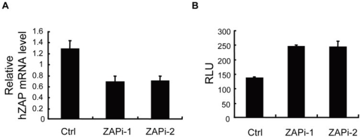Downregulation of endogenous hZAP enhances XMRV-luc expression.HOS cells were transfected with control siRNA (Ctrl) or siRNAs directed against hZAP (ZAPi-1 and ZAPi-2), followed by infection with XMRV-luc for 5 h. At 48 h postinfection, cells were lysed. (A) Endogenous hZAP mRNA levels were measured by real-time PCR. (B) Luciferase activity was measured and presented as relative light units (RLU). Data presented are means ± SD of three measurements.