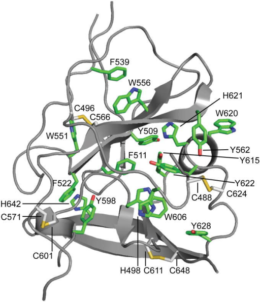 E2 core contains an extensive hydrophobic coreSheets A and B are held together by an extensive hydrophobic core composed of mostly aromatic amino acids (green) and five disulfide bonds (yellow).