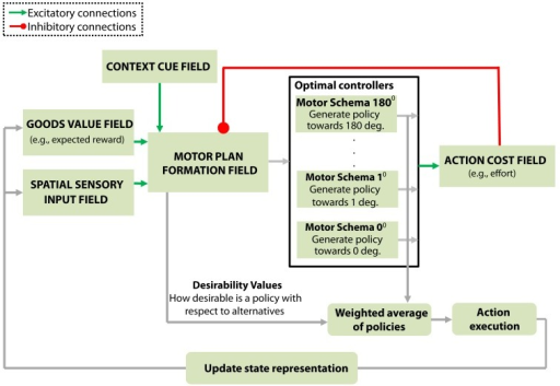 "Model architecture.The core component of the model is the motor plan formation field that dynamically integrates information from disparate sources. It receives excitatory inputs (green lines) from: i) the spatial sensory input field that encodes the angular representation of the alternative goals, ii) the goods-value field that encodes the expected benefits for moving towards a particular direction and iii) the context cue field that represents information related to the contextual requirements of the task. The motor plan formation field also receives inhibitory inputs (red line) from the action cost field that encodes the action cost (e.g., effort) required to move in a particular direction. All this information is integrated by the motor plan formation field into an evolving assessment of the ""desirability"" of the alternative options. Each neuron in the motor plan formation field is linked with a motor control schema that generates a direction-specific policy πj to move in the preferred direction of that neuron. The output activity of the motor plan formation field weights the influence of each individual policy on the final action-plan (see ""Model architecture"" in the results section for more details)."