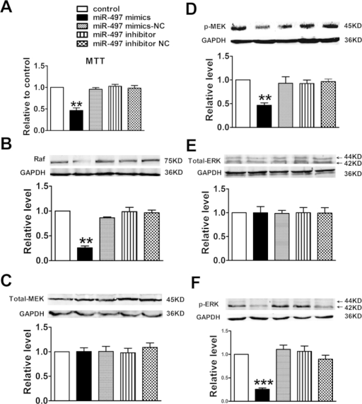 Effects of miR-497 overexpression on apoptosis in mouse breast tunmor model.(A) Quantitative analysis of miR-497 expression in tumor tissues by qRT-PCR analysis; (B–D) Proteins expression of VEGFR2, Bcl-2, and Bax. Data were expressed as mean ± EM, n = 3; **P < 0.01 vs. control group. (E) Cell apoptosis was determined by TUNEL assay and shown as percentage. (F) Representative apoptotic images of each group were taken at a magnification of ×200. Data were expressed as mean ± SEM, n = 10; **P < 0.01 vs. control group.