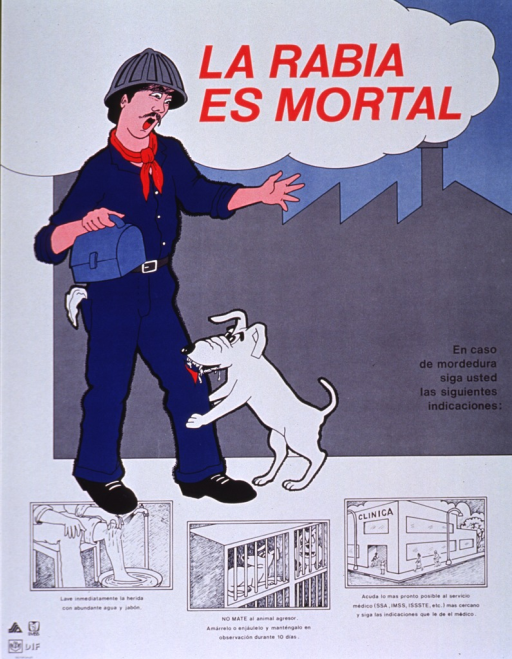 <p>Multicolor poster with red and black lettering.  Title at top of poster.  Visual image is an illustration of a factory worker, wearing a hard hat and carrying a lunch box, being bitten on the leg by a dog that foams at the mouth.  Caption begins in lower right corner of image.  Remaining caption text accompanies three illustrations depicting steps to take in case of a bite--the leg being washed with soap and water, the dog in a cage for observation, and people approaching a medical clinic.</p>