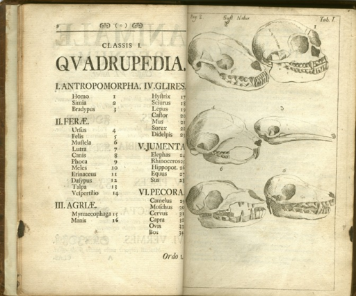 <p>Image of quadruped skulls and facing contents page listing intraorder and genius.</p>