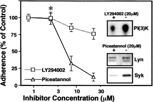 Inhibition of LCL binding by piceatannol. Increasing  concentration of LY294002 or piceatannol were incubated with  LCL for 15 min. Cells were then assessed for adhesion as described above. LY294002 caused visible decreases in LCL  spreading at concentrations as low as 2.5 μM (asterisk), and inhibited PI(3)K activity, (inset), but did not block attachment at  concentrations below 100 μM. The derived IC50 for piceatannol  inhibition of adhesion was ∼5 μM. Inhibition of Syk (> 90%),  but not the related src family kinase Lyn (18 ± 11%) was assessed by autokinase activity (inset).