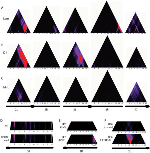 Genome-wide domainograms reveal non-random local enrichment of chromatin components.(A–C) domainograms for Lamin (A), D1 (B) and Mnt (C) along all major chromosome arms. Simple and nested patterns of local enrichment are visible. D) Domainogram comparison for Polycomb (mapped by DamID [21]) and H3K27me3 (mapped by ChIP [21]) on chromosome 3R. E) HP1 distribution on chromosome 2R in Kc167 cells grown in serum-containing (BPYE) and serum-free (HyQ) medium. A strong telomere-proximal region of enrichment is only observed in BPYE medium (indicated by the red bar). Data from BPYE medium is the same as in Fig. 1A–B. F) Domainograms of chromosome 2L for HP6 binding after RNAi of its binding partner HP1 and after a control RNAi (data from [24]). In D–F, only the bottom parts of the domainogram triangles are shown.