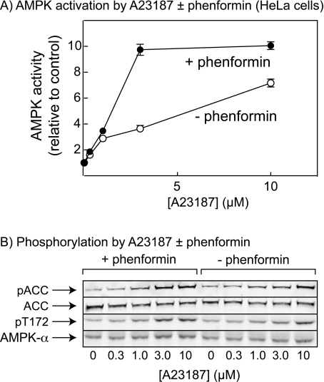 how to detect phosphorylation of a protein in vivo