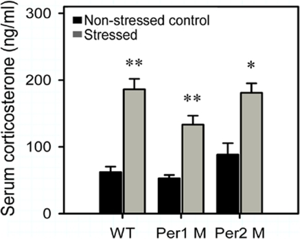 Increased serum corticosterone response to immobilization stress in different genotypes.Serum samples were collected from stressed and non-stressed control of wild type, Per1 mutant and Per2 mutant mice, and assayed with the corticosterone ELISA kit. Data shown represent the mean ± SEM of 4 animals from several independent experiments for each data point. The asterisks (*, p<0.05; **, p<0.01, one way ANOVA) indicate in each genotype, the significant differences of corticosterone level between the stressed mice and the non-stressed mice.