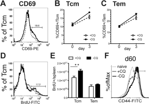 Chronic phase of a P. chabaudi infection enhances CD4+ Memory T cell activation and expansion.Mice were infected with 105 P. chabaudi (AS). On days 30-34 one group of mice was treated with chloroquine (+CQ), which quickly eliminated the infection, while the other mice retained a chronic infection (-CQ). A) Half of each group was re-infected with 105 P. chabaudi day 60 post-infection, and splenocytes were analyzed by flow cytometry on day 63 for CD4, CD44, CD62L and expression of the early activation marker CD69 (A–C) or incorporation of BrdU dosed into the water days 60–65 as an indicator of homeostatic proliferation (D, E), CD69 expression on central memory T cells (Tcm, CD44hiCD62lo) and effector memory T cells (Tem, CD44hiCD62Lint/hi) are shown. Dotted lines represent chloroquine treated mice (+CQ) while bold lines represent chronic infection (-CQ). Data shown is the average of 4–5 mice per group and experiment was repeated twice with similar results. * indicates p≤0.05, ** p≤0.01.