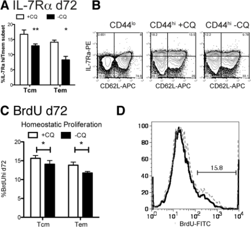 Chronic infection reduces IL-7Rαhi memory cells in both memory subsets.Mice were infected with 105 P. chabaudi. Days 30–34 half of the mice were treated with chloroquine (+CQ), while the other mice retained a chronic infection (-CQ). 2.5 months after infection, splenocytes were analyzed by flow cytometry for CD4, CD44, CD62L and (A, B) IL-7Rα (CD127) or incorporation of BrdU dosed into the water days 62–72 as an indicator of homeostatic proliferation, (C, D). Naïve cells (CD44lo) were used as an internal control to set the quadrants (B, left). Dotted lines represent chloroquine treated mice (+CQ) while bold lines represent chronic infection (-CQ). Data shown is the average of 4–5 mice per group and experiment was repeated twice with similar results. Contour plots (10% with outliers) are gated as described on each plot and are from representative animals. * indicates p≤0.05, ** p≤0.01.