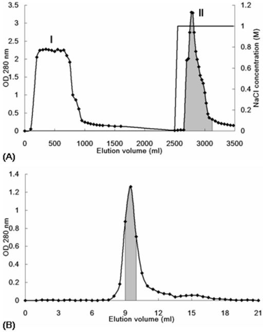 Profile of elution of bean extract from (A) Affi-gel blue gel and (B) Superdex 75.