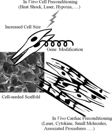 Illustration of the current preconditioning approaches to enhance cell survival.