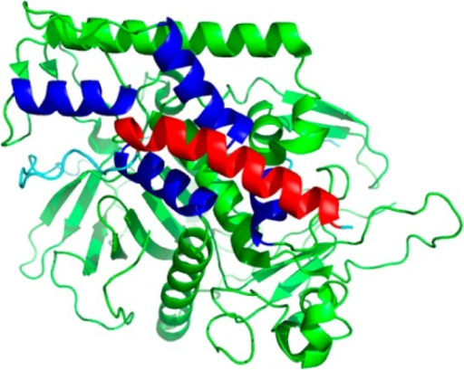 Structure of BoNT/A-LC (424 a.a. resolved, green)and SNAP-25 fragment(64 a.a. C-terminal, 59 a.a. resolved). BAP-24 region is shown inred, while the remaining SNAP-25 residues are shown in cyan and theα-exosite in blue (PDB 1XTG).
