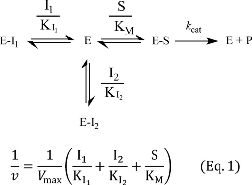 Mechanism of Mutually Exclusive InhibitionI1 and I2 are the concentrationsof two inhibitors; KI1 and KI2 are KI of I1 and I2 separately;S, KM, kcat, and vmax have their usual definitions. As shown in eq 1, atvarious concentrations of I2, curves of 1/v versusI1 have the same slope, giving parallel curves.