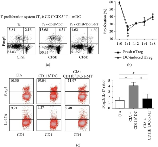 The conversion of Foxp3+Tregs from CD4+CD25−T cells through coculture with isolated splenic CD11b+IDO+DCs. (a) CD4+CD25−T cells (105) stimulated with mDCs (2 × 104) were cocultured for 4 days with isolated splenic CD11b+DCs (104) with or without 1-MT pretreatment. The cells were surface-stained with anti-CD4 mAbs, followed by intracellular staining with anti-Foxp3 mAbs to determine the frequency of CD4+Foxp3+Tregs. The dates are presented using a dot plot, expressed as the % positive cells. The results are representative of three experiments showing similar results. (b) After cocultivation for 4 days, as described in (a), CD11b+DC-induced CD4+CD25+T cells were isolated and used as inhibitors at different doses to suppress the proliferation of new CD4+CD25−T cells in response to stimulation with anti-CD3/28 mAbs. The suppressive activity of freshly isolated CD4+CD25+T cells was also examined as a control. The proliferative responses were measured after 4 days. The data are representative of three experiments with similar results, reported as the means ± SEM. #P > 0.05 compared with the indicated groups using unpaired t-tests. (c) CD4+T cells from the spleens of CIA mice treated with CD11b+DC with or without 1-MT on the third week after the onset of arthritis were collected and intracellularly stained with anti-Foxp3 and anti-IL-17A mAbs. FACS was used to measure the percent frequency of positively stained cells, and the frequencies of Treg/Th17 cells are expressed as the means ± SEM of four independent experiments. #P > 0.05, *P < 0.05 compared with the indicated groups using unpaired t-tests.