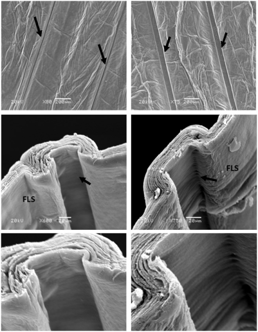 SEM images of patterned constructs, micro-moulded using 25 × 75 μm template (left-hand panel), and 100 × 75 μm template (right-hand panel). Upper row of images shows the overall, low magnification surface pattern of parallel grooves (arrows). Middle and lower rows of images show the transverse structure of individual grooves, with fine (<1 μm) ridges formed perpendicular to the groove axis in the floor and walls (lower high power images).
