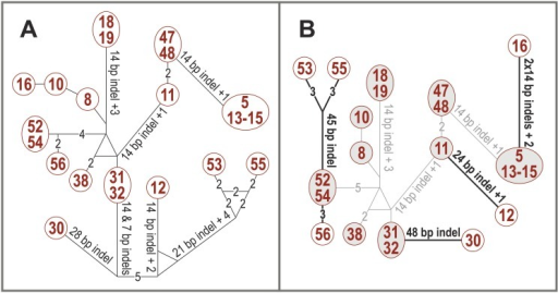 Haplotype networks showing the differences in the Collema-type trnL P6b regions.(A) Haplotype network constructed from the Collema-type trnL P6b regions with the program Network. (B) Haplotype network modified to reflect the possible evolutionary events in the Collema-type P6b region. One sequence from each clade present in the phylogenetic tree (Fig 1) was put together with the program Network (grey background and connecting lines). These connections reflect the overall similarity of the sequences and the different P6b types are probably results of independent adoption events. The rest of the P6b sequences were connected to their above mentioned phylogenetic relatives with the least amount of changes (black lines; each indel event or single nucleotide mutation equals one change), and the probable actual indel events and single nucleotide mutations are also marked with black.