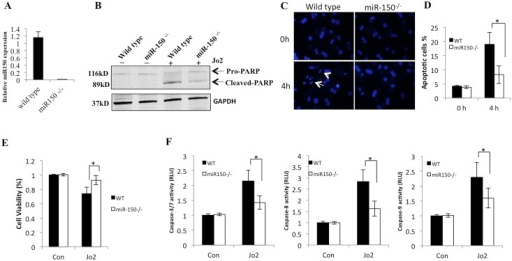 The role of miR-150 in Fas-induced primary hepatocyte apoptosis.Primary hepatocytes were isolated from eight-week-old male WT mice and miR-150 KO mice. (A) The expression of miR-150 in hepatocytes was quantified by qRT-PCR. Data are expressed as mean ± SD. (B) Hepatocytes were treated with Jo2 (0.5 μg/mL) plus CHX (10 μg/mL) for 4 hours. The cell lysates were obtained for Western blotting to detect PARP cleavage. (C) Representative Hoechst staining (200×) of WT and miR-150 KO hepatocytes 0 and 4 hours after treatment with 0.5 μg/mL Jo2 plus 10 μg/mL CHX. Arrows indicate fragmented nucleus. (D) Quantitative analysis for apoptotic cells under Hoechst staining. Data are expressed as mean ± SD, *p<0.05. (E) Cell viability as assessed by trypan blue exclusion 4 hours after treatment with 0.5 μg/mL Jo2 plus 10 μg/mL CHX or with an equal volume of 1×PBS plus DMSO as control (Con). The data are expressed as mean ± SD, *p<0.05. (F) Caspase-3/7, caspase-8, caspase-9 activities in WT and miR-150 KO hepatocytes 4 hours after treatment with 0.5 μg/mL Jo2 plus 10 μg/mL CHX or with an equal volume of 1×PBS plus DMSO as control (Con). The results are expressed as mean ± SD of fold changes over WT hepatocytes.