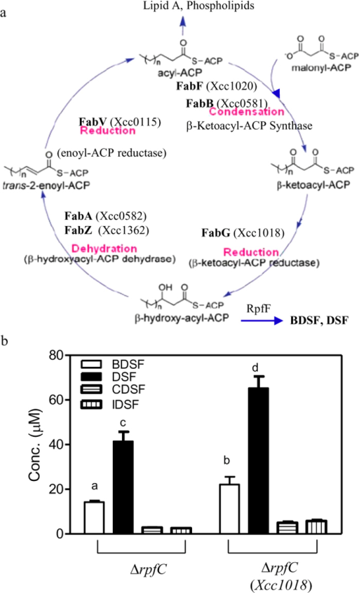 The FabG-encoding gene Xcc1018 is involved in DSF, BDSF, CDSF and IDSF biosynthesis in Xcc.(a) The proposed FAS elongation cycle in Xcc strain ATCC33913. The enzymes composing the FAS elongation cycle (FabA, FabB, FabF, FabG, FabZ) were proposed based on BLASTP analysis of their counterparts in E. coli. (b) The effect of overexpression of Xcc1018 via the expression vector pBBR-1-MCS2 on DSF-family biosynthesis 24 h after inoculation. The data are the means ± one standard deviation of three independent assays. Different letters indicate significant differences between treatments (LSD at P = 0.05).