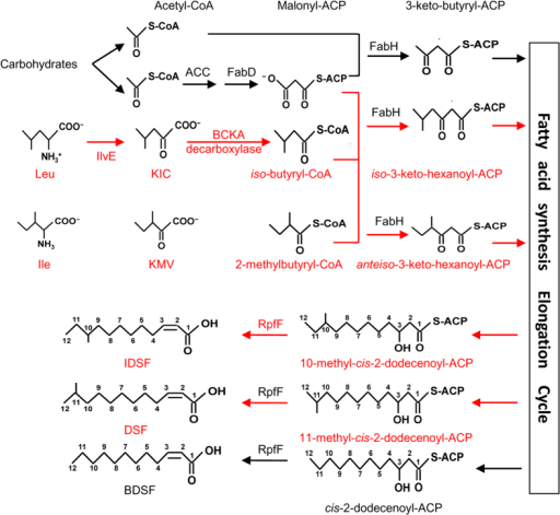 A schematic model for the general biosynthetic pathway of DSF, BDSF and IDSF in Xanthomonas.BCAA: branched-chain amino acids; BCKA: branched-chain α-ketoacids. ACC: acetyl-CoA carboxylase. KIC: 2-keto-isocaproic acid. KMV: 2-keto-β-methylvaleric acid.