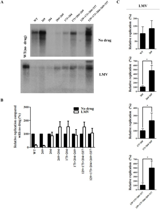 Effect of rtL269I and other substitutions on resistance to lamivudine (LMV).(A) HBV DNA constructs were transfected into Huh7 cells, which were treated with LMV for 3 days. The intracellular HBV DNA was prepared for Southern blot analysis. A representative result has been shown. (B) The relative replication levels of each HBV mutant (no drug vs LMV treatment) were calculated based on the results of Figs 2C and 3A. (C) The relative replication ability of the HBV mutants treated with LMV were determined by Southern blotting and quantified by Phosphorimager (*, P < 0.05). The relative replication levels of each HBV construct was shown as the mean value of at least three independent experiments.