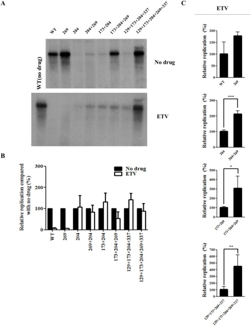 Effect of rtL269I substitution on the resistance to entecavir (ETV).(A) HBV 1.2mer DNA of all the mutants was transfected into Huh7 cells, which were treated with ETV for 3 days. The intracellular HBV DNA level was determined by Southern blot analysis. A representative result was displayed. (B) The relative replication levels of each HBV mutant (no drug vs ETV treatment) was calculated based on the results displayed in Figs 2C and 4A. (C) The relative replication ability of the HBV mutants treated with ETV were determined by Southern blot analysis, and quantified by Phosphorimager (*, P < 0.05; **, P < 0.01; ***, P < 0.001). The relative replication level of each HBV construct was displayed as the mean value of at least three independent experiments.
