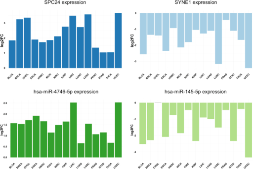 Genes and miRNAs deregulated almost all of the studied tumour types: SPC24 is differentially overexpressed in all tumour types; SYNE1 is repressed in all tumour types; miR-4746-5p up-regulated in all the tumour types; and miR-145-5p, down-regulated in all tumour types except Cholangiocarcinoma (CHOL).