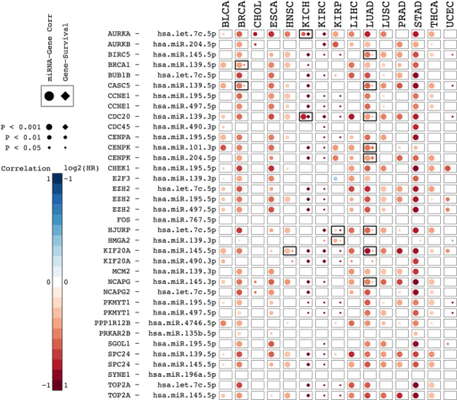 Survival with multifactorial Cox models in 15 tumours.Combined correlation and survival analysis for the selected 36 general miRNA-gene pairs. Every box summarizes the results of the correlation and survival analysis of a miRNA-gene pair (rows) in a particular cancer type (columns). Circles represent miRNA-gene expression correlations, after accounting for CNAs and gene methylation. Negative correlations in red, and positive correlations in blue. Diamonds represent the log2 of the hazard ratio (HR) of Cox proportional hazards models that included tumor stage (or tumor grade, in the case of PRAD) and the log-transformed gene expression values as explanatory variables. Positive log2(HR), i.e. shorter survival, in shades of red. Negative log2(HR), i.e. longer survival, in shades of blue. All P-values were corrected for multi-hypothesis testing by the FDR method. Pairs reaching statistical significance (Adj. P < 0.05) in both miRNA-gen expression correlation and gene expression-survival association are indicated with thicker boxes.