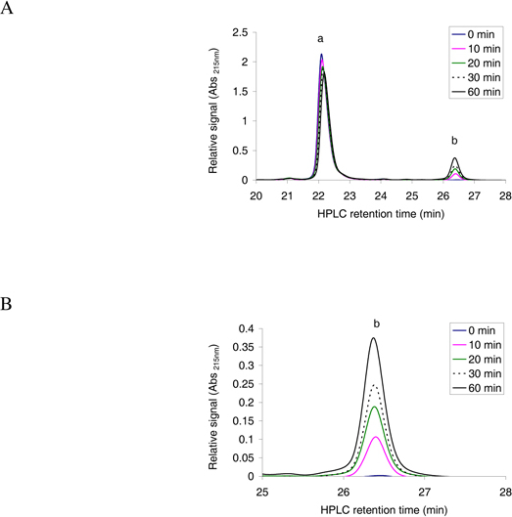 Reverse phase HPLC absorbance profile at 215 nm for the separation of acetylated and non-acetylated peptides. A; The oligopeptide 1MLGTE-RRR24 (200 μM) was incubated with acetyl CoA (300 μM) and purified MBP-hNaa30p (80 nM) in acetylation buffer for 60 minutes at 37°C. Samples were collected at indicated time points and analysed with reverse phase HPLC. The resulting absorbance profile at 215 nm indicate good separation of unacetylated ('a') and acetylated oligopeptides ('b'). B; An expanded version of the absorbance profile for the formation of acetylated oligopeptide. A clear time dependent increase in the absorption signal is observed.