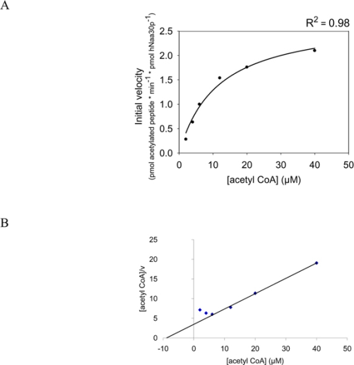 Determination of Km and Vmax for acetyl CoA, based on the generation of acetylated 1MLAL-RRR24 oligopeptide. Purified MBP-hNaa30p (80 nM) was incubated with 1MLAL-RRR24 oligopeptide at saturated levels and varying concentrations of acetyl CoA (4 – 40 μM) in acetylation buffer for 30 minutes at 37°C. A; Non linear regression analysis of the dose dependent curve generated based on the analysis of the acetylated oligopeptide absorption signal at 215 nm. The coefficient of determination (R2) is given above the plot. B; Hanes-Woolf plot of the dose dependent acetylation signal.