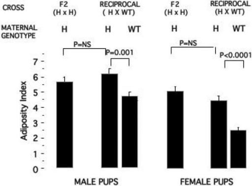 Maternal obesity effects of the PREP gene-trap mutation on AI in male and female pups. Values are mean ± SE. See Figure 2 legend for methods. There are no significant differences between mice born to PREPWT/gt mothers. The F2 Intercross has only PREPWT/gt heterozygous mothers. Pup genotypes were PREPWT/gt or PREPWT/WT and are combined in this analysis since there was no genotype difference. Male and female heterozygous breeders in the reciprocal cross were littermates of PREPWT/WT × PREPWT/gt crosses.