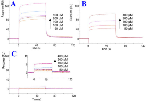Characterization of CypA binding region of the N-terminus of Vpr. Synthetic Vpr30-40 (A), Vpr32-38 (B), Vpr33-37(C, D) were tested for binding to immobilized recombinant CypA using SPR biosensor system. Individual peptides were injected at concentration ranging from 0-400 μM over CM5 chip immobilized with 980 RU CypA. The curves were best fit to a two state model, and ka1, ka2, kd1, kd2 and KD were calculated for the respective sensograms (Table 1.).