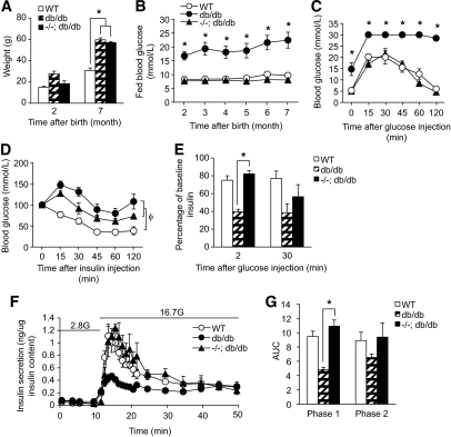 RIPcre+ Ptenfl/fl Leprdb/db mice exhibited comparable weight gain and normal glucose tolerance despite being insulin resistant with normal β-cell function. A: Weight of wild-type (WT), RIPcre+ Pten+/+ Leprdb/db (db/db), and RIPcre+ Ptenfl/fl Leprdb/db (−/−; db/db) mice at 2 and 7 months of age (n >7). B: Fed blood glucose of wild-type, RIPcre+ Pten+/+ Leprdb/db, and RIPcre+ Ptenfl/fl Leprdb/db mice from 2 to 7 months of age (n >7). C: Glucose tolerance test of wild-type, RIPcre+ Pten+/+ Leprdb/db, and RIPcre+ Ptenfl/fl Leprdb/db mice at 7 months of age (n >7). D: Insulin tolerance test of wild-type, RIPcre+ Pten+/+ Leprdb/db, and RIPcre+ Ptenfl/fl Leprdb/db mice at 7 months of age (n >7). E: In vivo glucose-stimulated insulin secretion of wild-type, RIPcre+ Pten+/+ Leprdb/db, and RIPcre+ Ptenfl/fl Leprdb/db mice at 7 months of age (n = 3). F and G: Insulin secretion per 60 islets during perifusion analysis (F) and quantification of area under the curve (G) of wild-type, RIPcre+ Pten+/+ Leprdb/db, and RIPcre+ Ptenfl/fl Leprdb/db mice (n = 3). *P < 0.05 for RIPcre+ Ptenfl/fl Leprdb/db mice compared with RIPcre+ Pten+/+ Leprdb/db mice or as indicated; φP < 0.05 for both RIPcre+ Pten+/+ Leprdb/db and RIPcre+ Ptenfl/fl Leprdb/db mice compared with wild-type mice. Results are presented as mean ± SE.