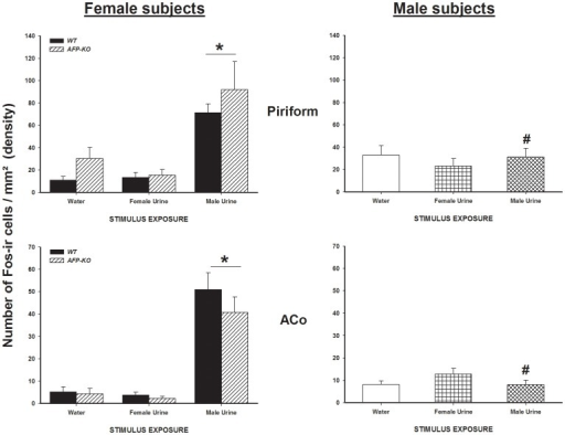 Exposure to male urinary odors increases the number of Fos-ir cells in WT and AFP-KO females but not in WT males.Mean +/− SEM number of Fos-ir cells per mm2 (density) in brain regions which are part of the main olfactory pathway in male (intact) and female WT and AFP-KO female (ovariectomized and implanted with an E2 capsule) mice exposed to either water, estrous female or male urinary odors. * P<0.05 different from females that were exposed to water or to estrous female urine. # P<0.05 different from females of the same genotype exposed to intact male urine.