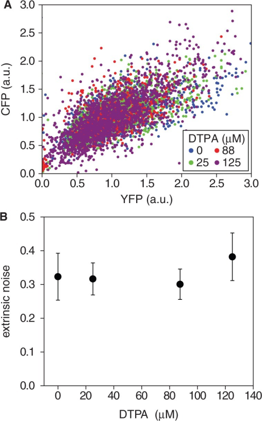Robustness of extrinsic noise to different levels of iron deprivation. (A) Representative scatter plot of fluorescence intensities of CFP and YFP reporters fused to different copies of the pLac promoter in the same cell, measured at different DTPA concentrations: 0 µM (blue), 25 µM (green), 88 µM (red) and 125 µM (violet). Intensities were normalized both by cell volume and by the mean over the population. (B) Extrinsic noise  as a function of DTPA concentration (4). The data represent averages over two independent experimental runs, each consisting of ∼1300 cells. Error bars represent standard errors.