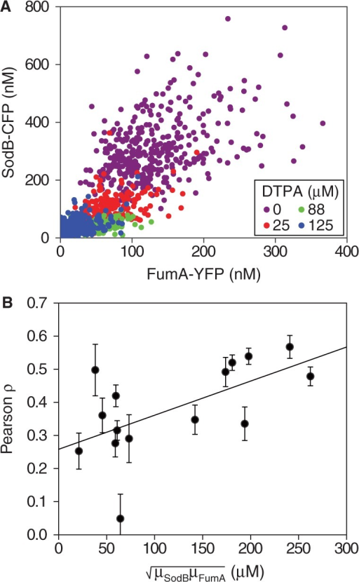 Correlation between the expressions of two RyhB targets for different levels of iron deprivation. (A) Scatter plot of SodB-CFP and FumA-YFP concentrations measured in the same individual cells, for different concentrations of DTPA chelator: 0 µM (violet), 25 µM (red), 88 µM (green) and 125 µM (blue) in a representative experiment. (B) Pearson correlation coefficient ρ between SodB-CFP and FumA-YFP concentrations measured within the same cells as a function of the geometric mean of SodB-CFP and FumA-YFP concentrations (), corresponding to the data shown in Figure 3. Error bars represent standard errors computed from 10 000 bootstrap samples. The straight line, a linear fit to the data serving as a guide to the eye, highlights the decreasing trend of ρ with increasing RyhB production. The data were obtained in four independent experiments, each carried out under the same conditions as in Figure 1.