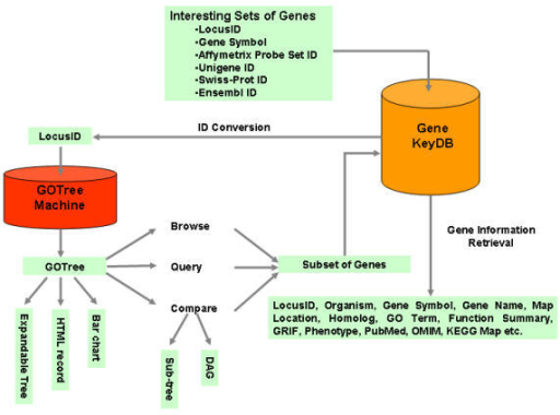 Schemetic overview of the GOTM GOTM is flexible in the input identifier (LocusID, gene symbol, Affymetrix Probe Set ID, Unigene ID, Swiss-Prot ID and Ensembl ID). GOTM produces different kinds of visualizations for different purposes, including 1) an expandable GOTree for online browsing 2) HTML output for an archivable record and 3) a bar chart for publication. Statistical analysis is used to compare gene sets. Sub-tree and DAG (Direct Acyclic Graph) can be generated for enriched GO categories.