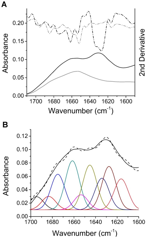 Fourier transform infrared spectroscopy shows that shaking-induced fibrils are rich in β-sheet.A) FTIR of fibrils formed by shaking-induced conversion of recMoPrP 23–231 (at 250 rpm and 37°C) shows they are rich in β-sheet structure (black line), as compared to monomeric recMoPrPc23–231(grey line). The absorbance FTIR spectra are shown in solid lines and the corresponding 2nd derivative spectra are shown in dashed lines. B) Spectral deconvolution and component analysis of the fibril FTIR spectrum (black) generated by fitting Gaussian peaks to a deconvoluted spectrum (brown line).
