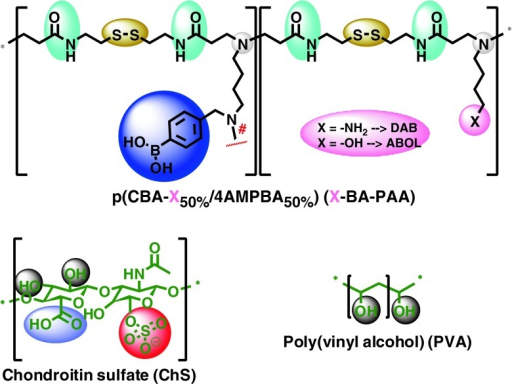 Chemical structures of DAB-BA-PAA, ABOL-BA-PAA, ChS, and PVA utilized as main components for multilayer formation. Control polymer DAB-Bn-PAA is similar to DAB-BA-PAA but with benzyl moiety instead of the phenylboronic acid moiety.