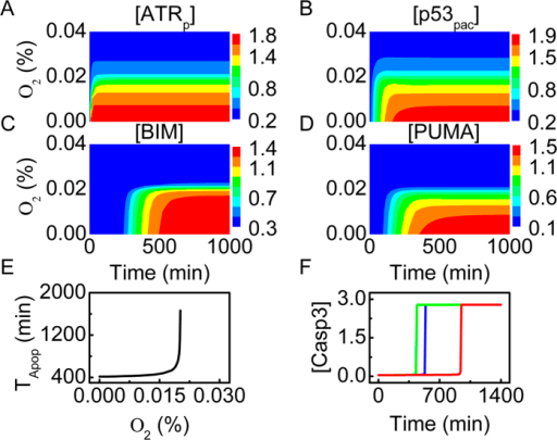 Protein dynamics and apoptosis induction under severe hypoxia.(A–D) Color-coded concentrations of ATRp (A), p53pac (B), BIM (C) and PUMA (D) as a function of oxygen concentration and time. (E) The timing of Casp3 activation versus oxygen concentration. (F) Time courses of [Casp3] with oxygen concentration at 0.01% (green), 0.018% (blue), or 0.02% (red).