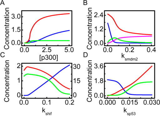 Interplay between HIF-1α and p53 in anoxia.(A) Bifurcation diagrams of [p53pac] (red), [HIF-1αac] (blue) and [Mdm2n] (green) versus the amount of p300. (B) Bifurcation diagrams of [p53pac] (red), [HIF-1αac] (blue), [Mdm2c] (green) and [Mdm2n] (pink) versus the p53-induced production rate of Mdm2, ksmdm2. (C) Bifurcation diagrams of [HIF-1αac] (blue, on the right axis), [p53pac] (red) and [PUMA] (green) versus the production rate of HIF-1α, kshif. (D) Bifurcation diagrams of [HIF-1αac] (blue), [p53pac] (red) and [PUMA] (green) versus the production rate of p53, ksp53.