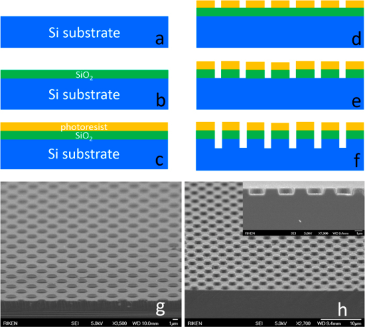 Steps for fabricating a mPSiS by using standard photolithography and ICP etching techniques (a–f).Si substrate after treated with a BOE (a), deposited SiO2 by PECVD (b) and coated a photoresist layer (c). Using standard photolithography to lithograph the mask (d), then etched the mask (SiO2) (e,g) and Si substrate (f ). Finally, Si substrate etched (mPSiS) with SiO2 has been removed (inset shows cross-sectional image) (h).