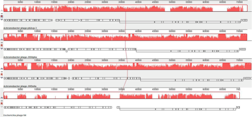 Multiple genome alignment generated by Mauve software (http://asap.ahabs.wisc.edu/mauve/), and the chromosomes of Achromobacter phages phiAxp-3, JWAlpha and JWDelta and the Enterobacter phage, N4.Genome similarity is represented by the height of the bars, which correspond to the average level of conservation in that region of the genome sequence. Completely white regions represent fragments that were not aligned or contained sequence elements specific to a particular genome.