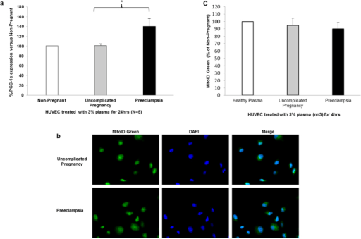 Determination of mitochondrial biogenesis/mass in plasma treated HUVEC.(a) PGC-1α protein expression was detected by fluorescent microscopy and quantified using Image J software. Data is the mean of 5 independent experiments and are expressed as difference in percentage pixel intensity between the study groups ± SEM. *P < 0.05. (b) Mitochondrial mass was determined using fluorogenic MitoID Green reagent. Confocal microscopy of MitoID Green (green fluorescence, 1st panel) and Hoechst 33342 (blue fluorescence, 2nd panel) at 20X. Merged image localizes mitochondria (3rd panel). (c) Mitochondrial mass (MitoID Green intensity) was quantified using Image J software. Data is the mean of 3 independent experiments and are expressed as difference in percentage pixel intensity between the study groups.