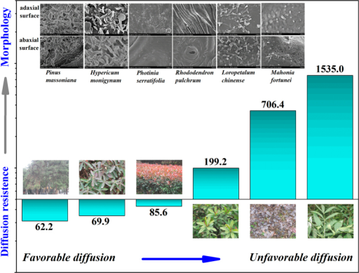 Plant uptake and diffusion resistance of organic pollutants were dominated by the leaf surface morphologies and micro-structures of epicuticular wax rather than just their lipid contents.